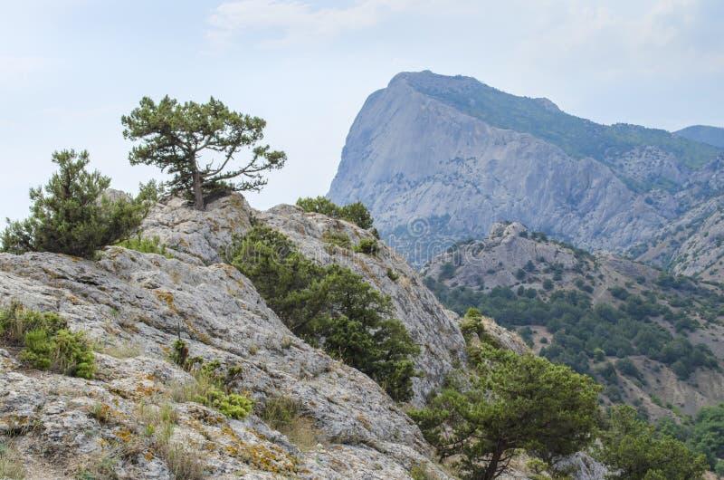 杉木高在山 免版税库存图片