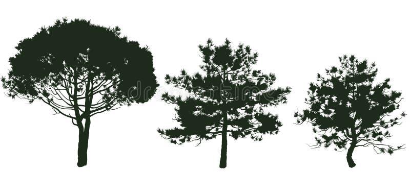 杉木2 皇族释放例证