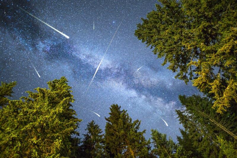 杉树剪影银河流星雨 免版税库存图片