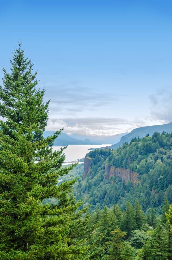 杉树和哥伦比亚河峡谷 免版税库存图片