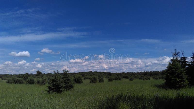 杉树和天空 免版税库存照片
