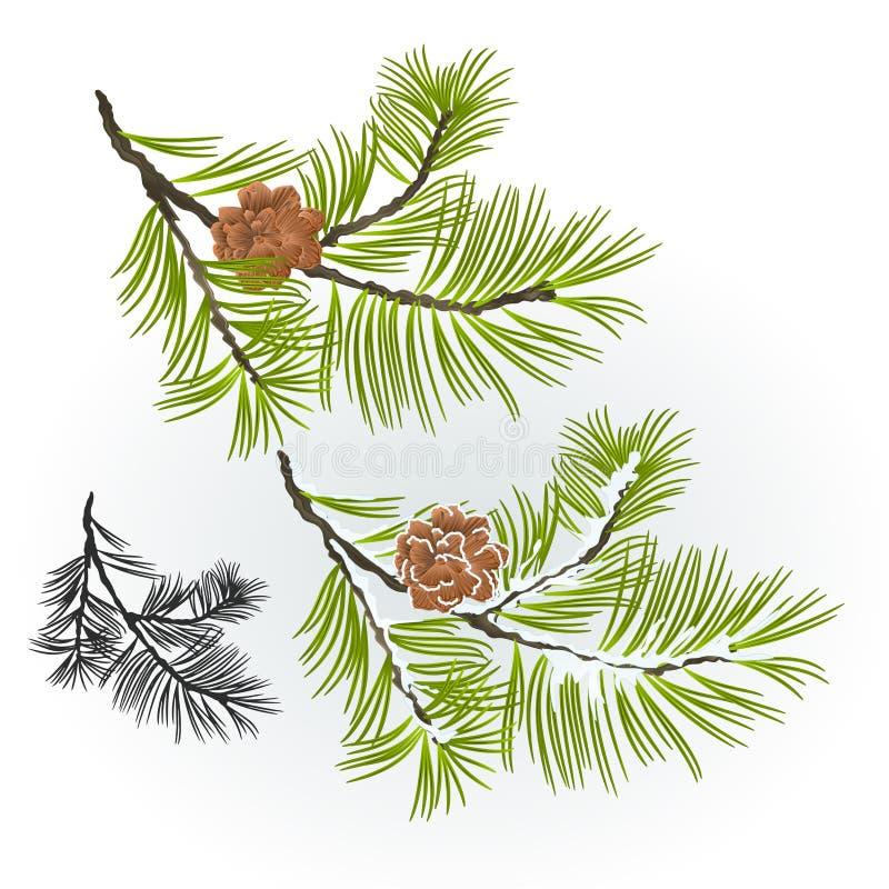 杉树和杉木秋季锥体的分支和编辑可能冬天多雪的自然本底传染媒介的例证 库存照片