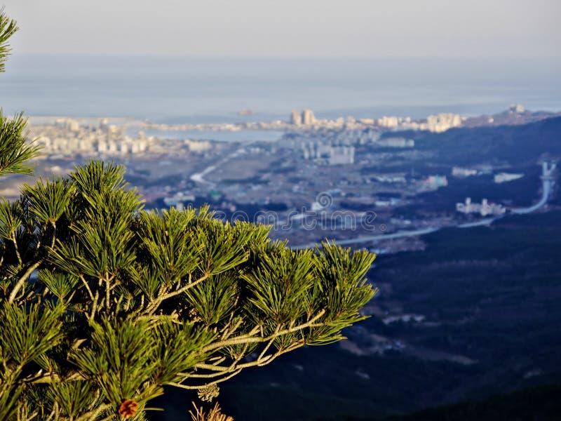 杉树和看法对束草市 图库摄影