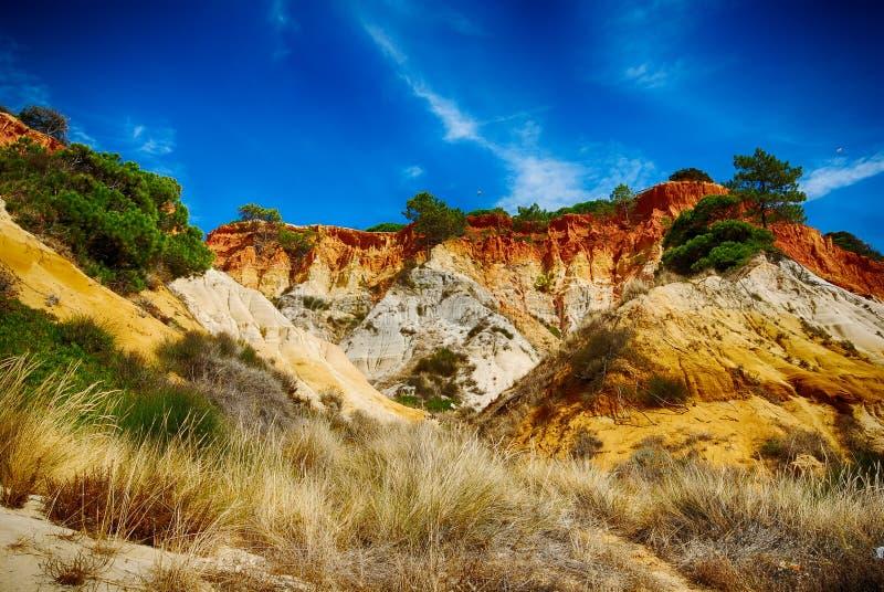 杉树和红色峭壁在沿海,阿尔加威,葡萄牙 免版税图库摄影