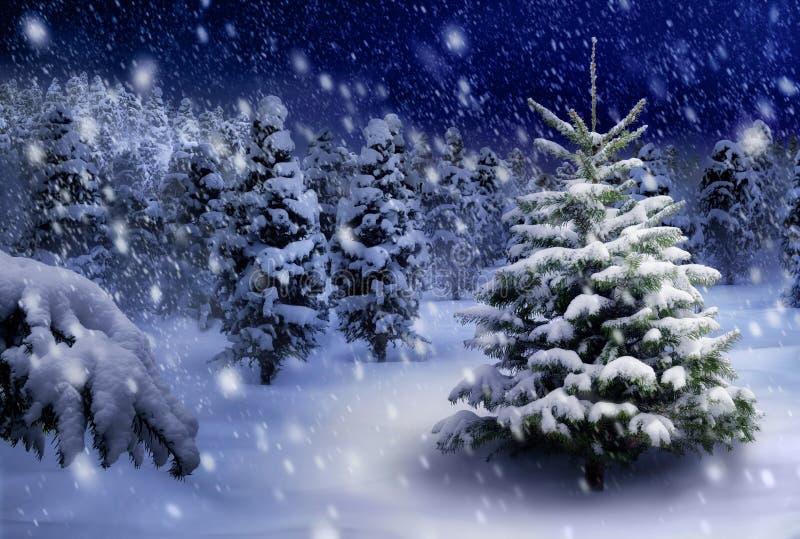 杉树在多雪的夜 库存图片