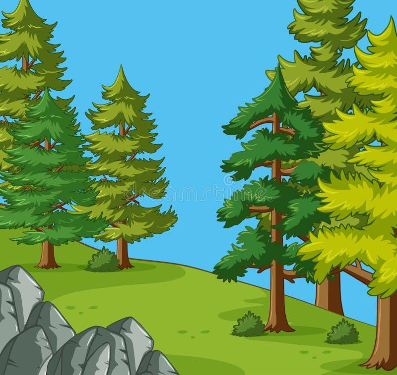 杉树在露营地 库存例证