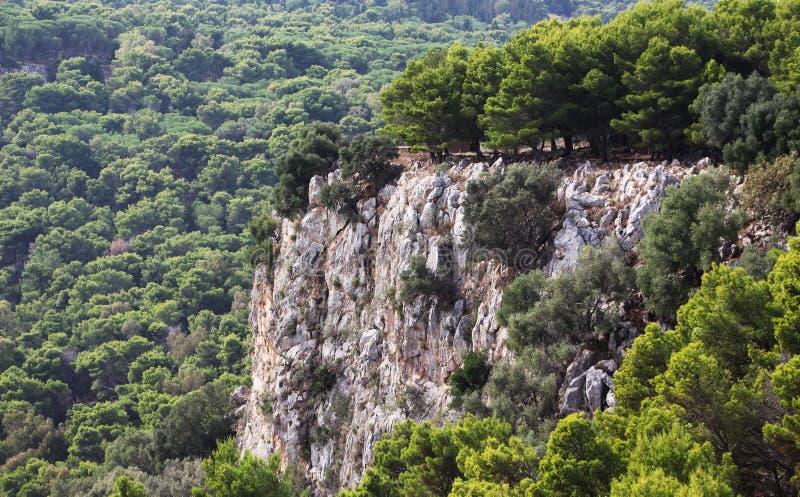 杉树木头和岩石峭壁 免版税库存照片