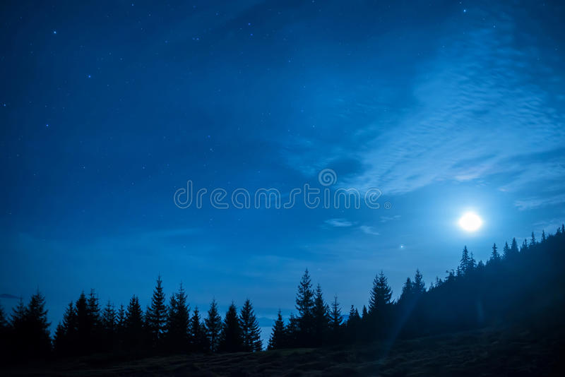杉树森林在月亮和蓝色黑暗的夜空下的 库存图片