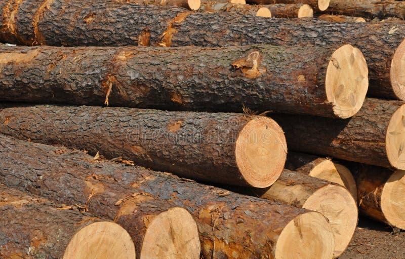 杉树的树干 免版税库存照片