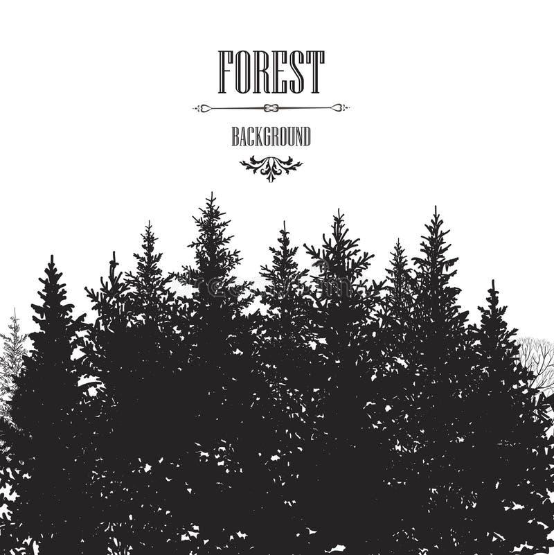 杉树边界 森林背景树剪影边界 向量例证