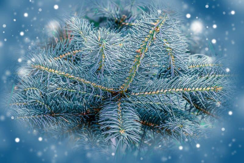Download 杉树,圣诞节设计的背景 库存图片. 图片 包括有 空白, 绿色, 背包, 锥体, brander, 蓝色 - 59109781