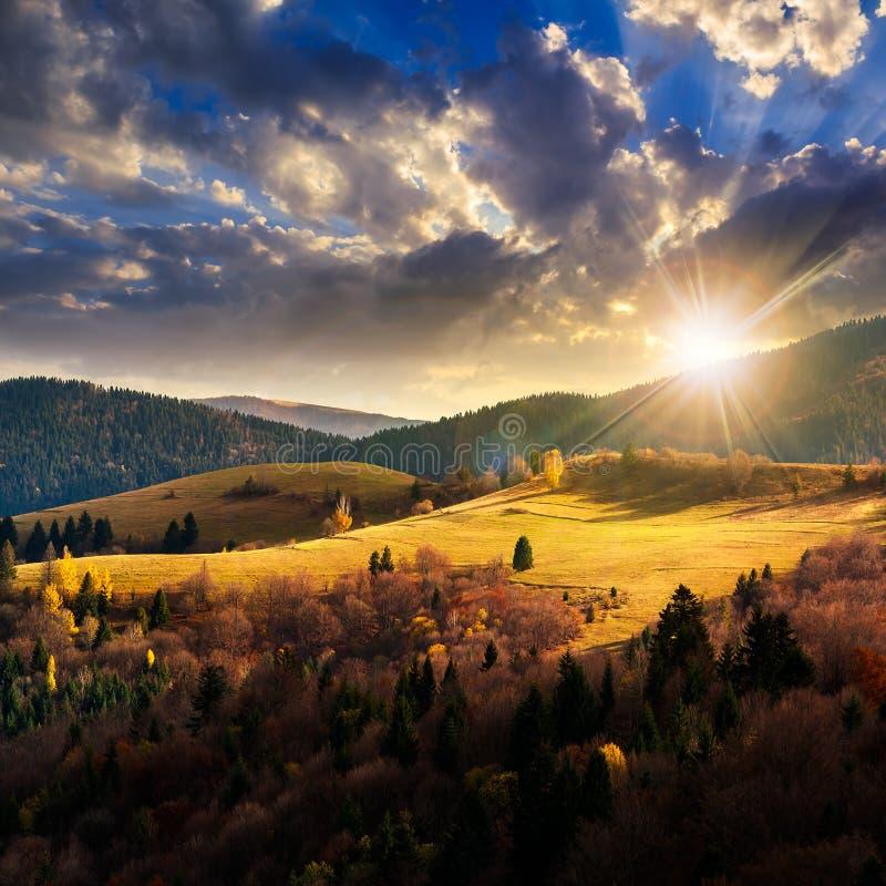 杉树临近在山的谷在山坡在天空下与 库存照片