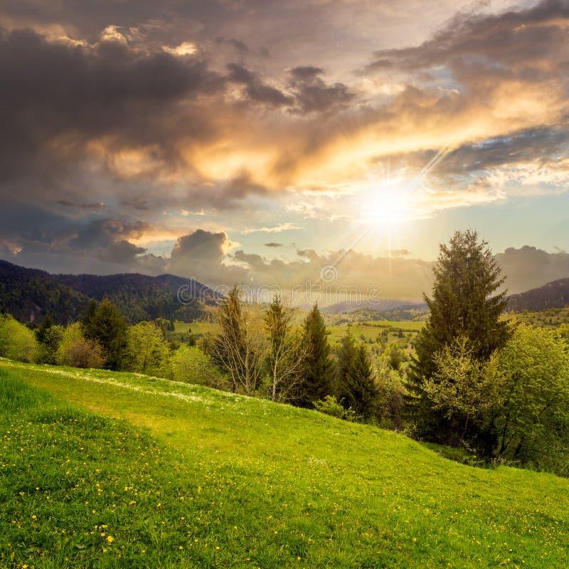 杉树临近在山的谷在山坡在日落 免版税库存图片
