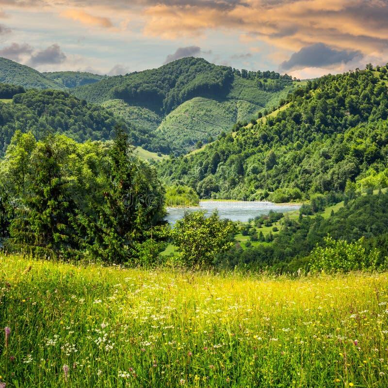 杉树临近山的草甸 免版税库存图片