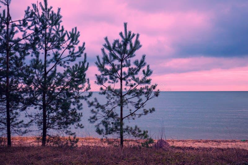 杉树临近海 免版税图库摄影