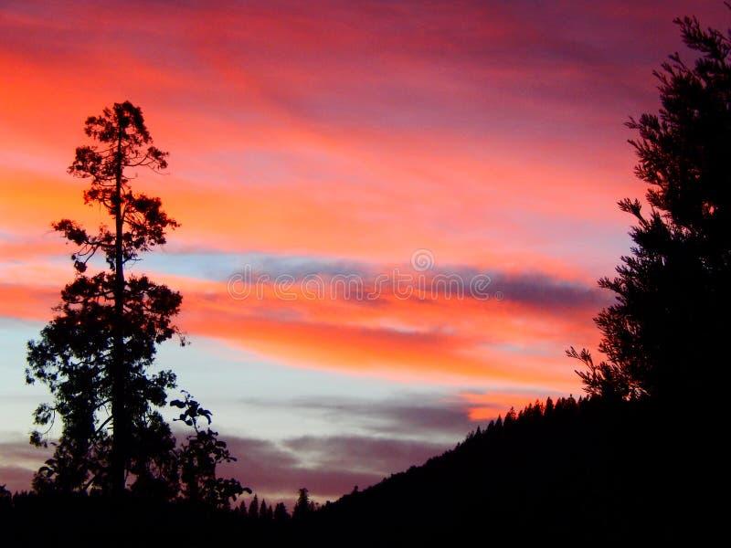 杉树Silhoutte日落视图在山的 免版税库存照片