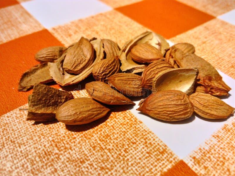 杏仁和壳在桌布 图库摄影