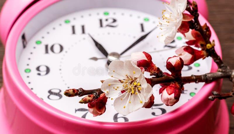 杏子分支与花的在时钟附近 春天time_ 库存照片