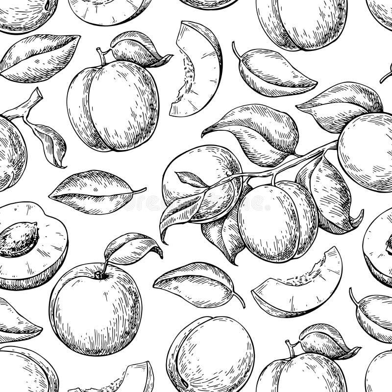 杏子无缝的模式 得出花卉草向量的背景 手拉的果子 向量例证