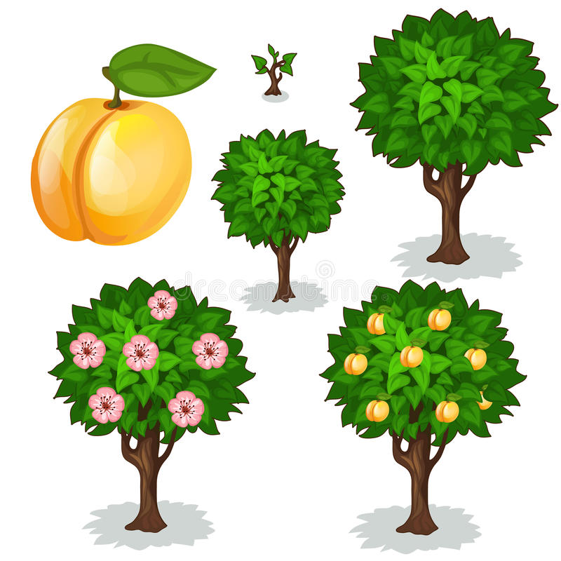 杏子的种植和耕种 向量 向量例证