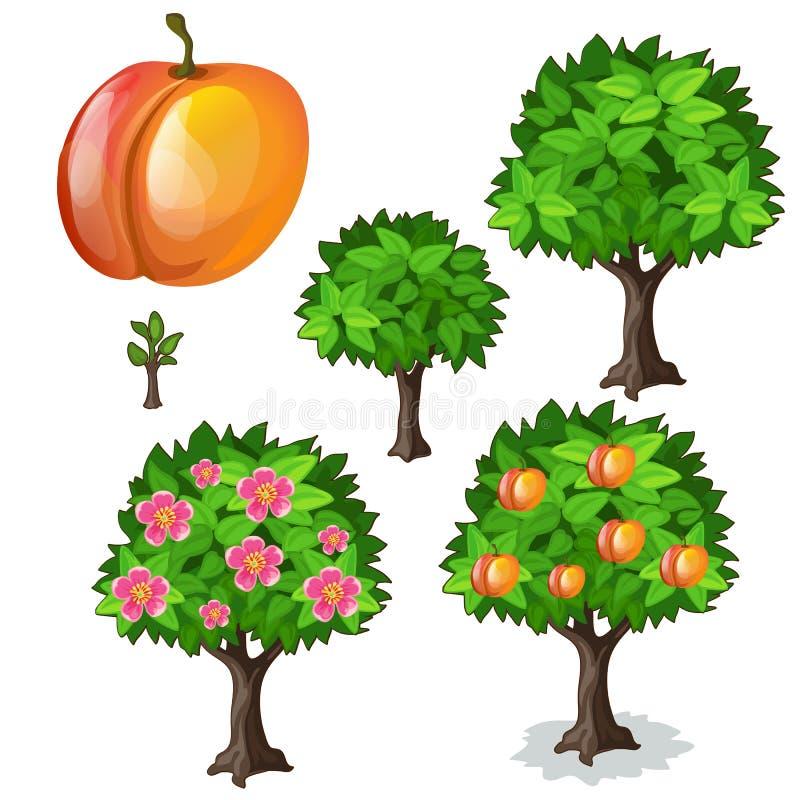 杏子的种植和耕种 向量 库存例证