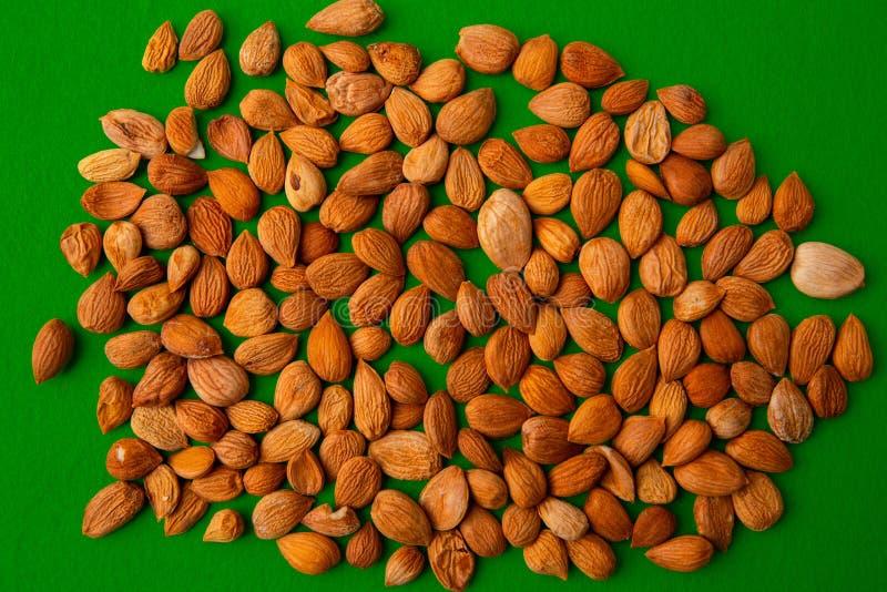 杏子种子  免版税库存图片