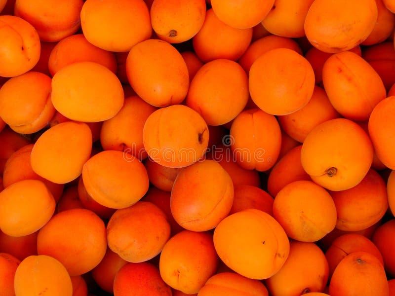 杏子 免版税库存照片
