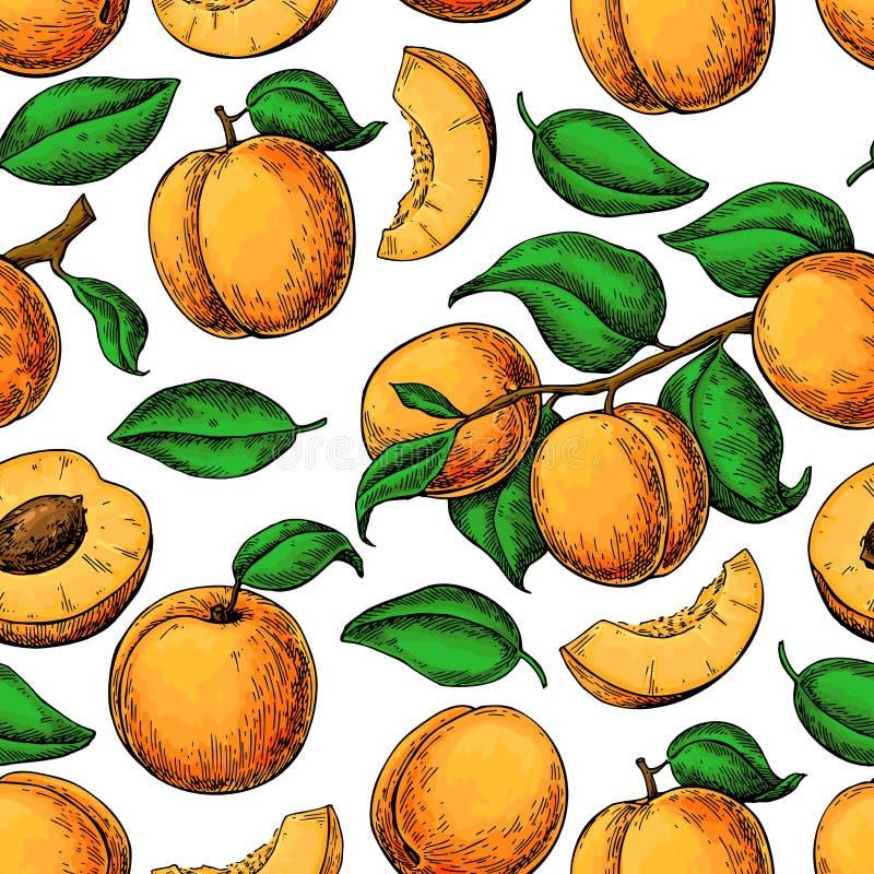 杏子colorApricot无缝的样式 得出花卉草向量的背景 凹道现有量纸张水彩 皇族释放例证