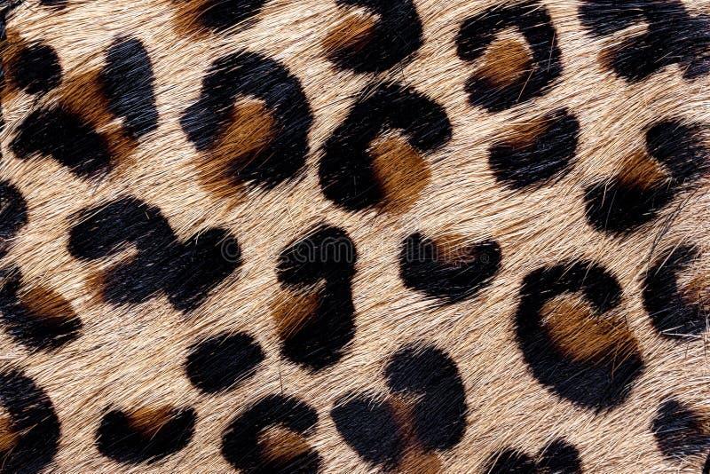 材料在动物皮毛样式,背景中 免版税库存照片