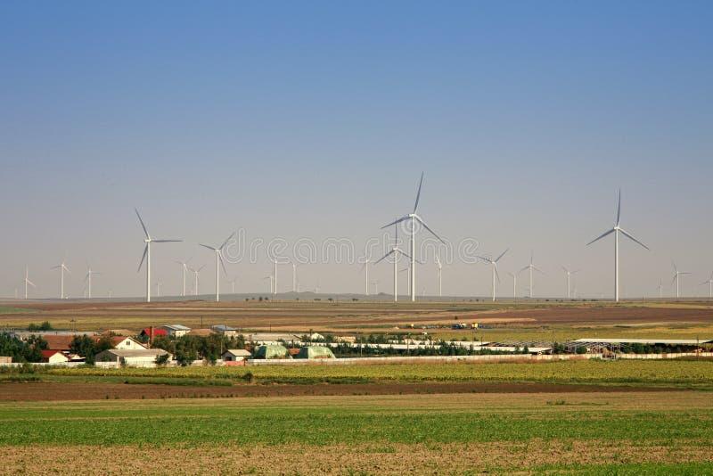 村庄和风能金钱的力量植物  库存照片