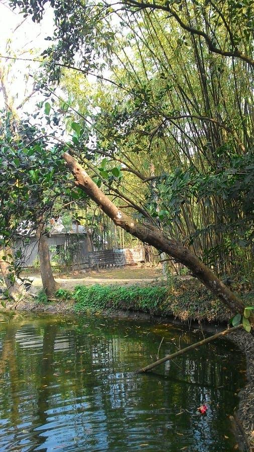 村庄池塘 库存照片