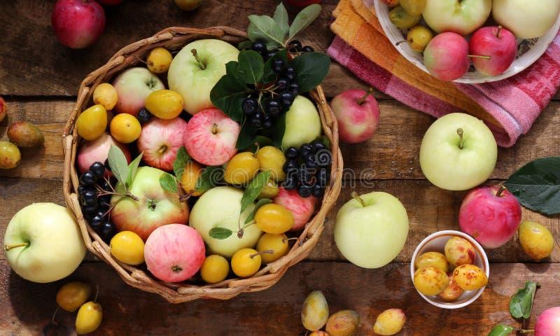 村庄苹果、李子和黑堂梨属灌木在桌上 库存图片