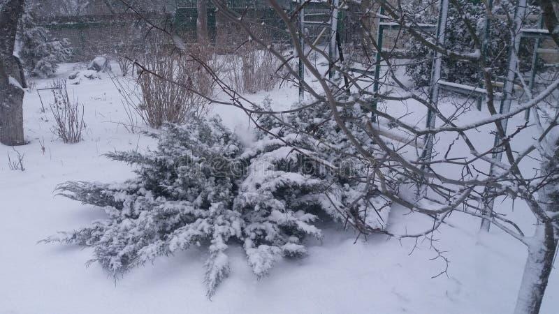 杜松哥萨克人在冬天,从乌克兰的风景 库存照片