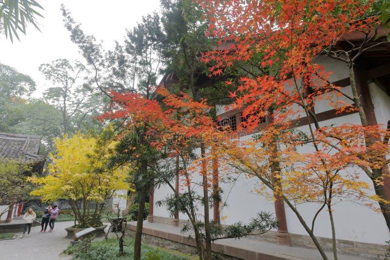 杜甫红色漆树盖了村庄公园,多孔黏土rgb 库存照片