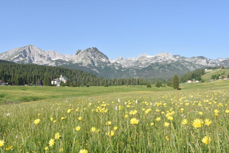 杜米托尔国家公园山全景和夏天花 免版税库存照片