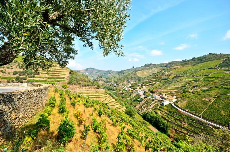 杜罗河谷:葡萄园和小村庄在比索da Regua,葡萄牙附近 图库摄影