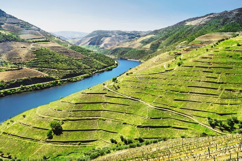 杜罗河谷 葡萄园和风景在Pinhao镇,葡萄牙附近 库存图片
