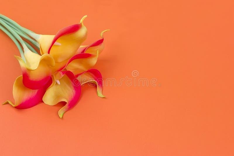 束与丝带的橙黄水芋属在橙色背景 库存照片