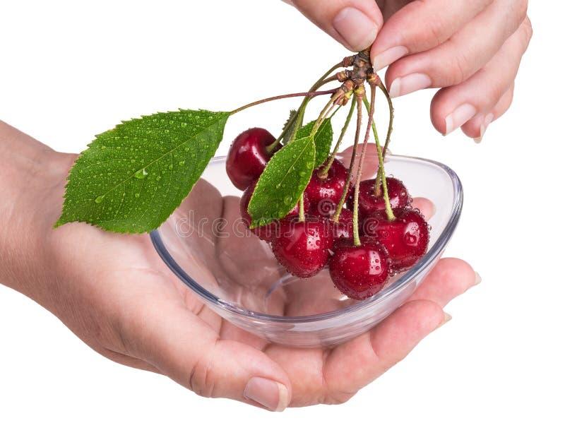 束与人的手和玻璃碗的甜樱桃 李属avium 免版税库存图片