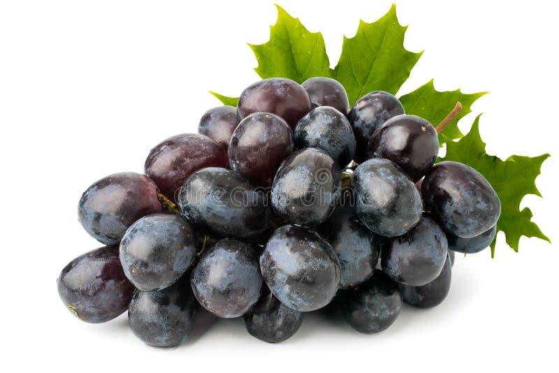 束与叶子在白色背景,关闭的成熟蓝色葡萄 免版税库存图片