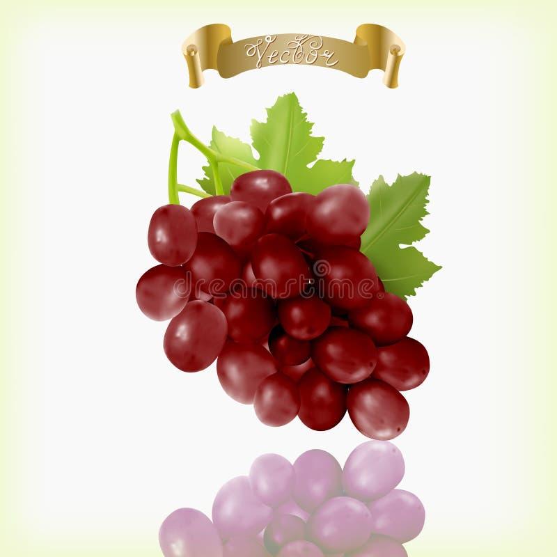 束与在白色背景隔绝的藤叶子的红葡萄 现实,新鲜,自然食物,点心 皇族释放例证