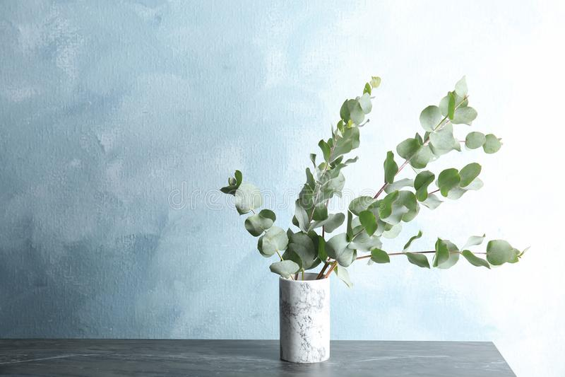 束与新鲜的叶子的玉树分支 免版税库存图片