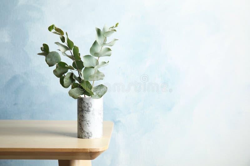 束与新鲜的叶子的玉树分支 库存图片