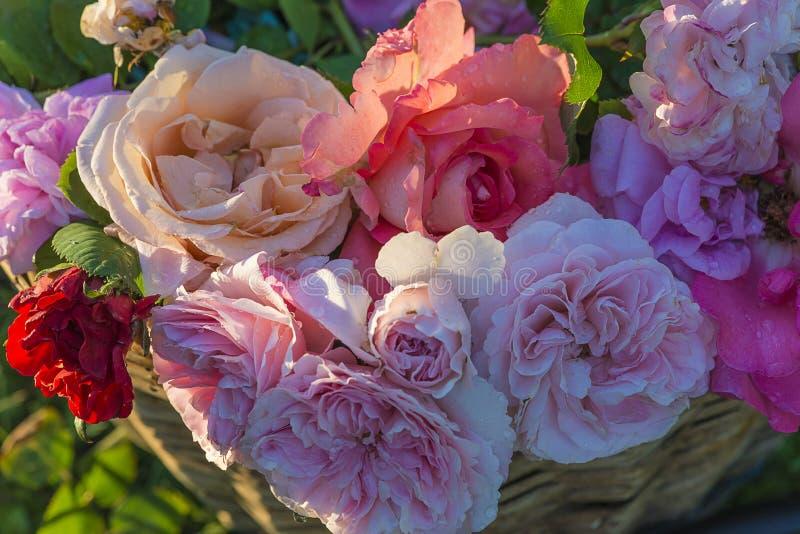 束与水下落的多彩多姿的玫瑰 库存图片