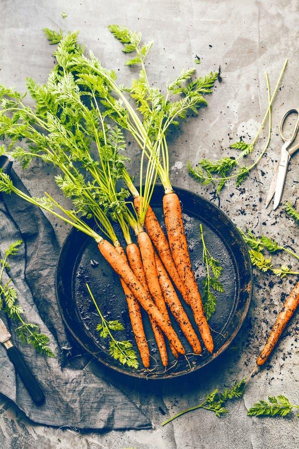 束与绿色叶子的新鲜的红萝卜在beton背景 蔬菜 食物 库存图片