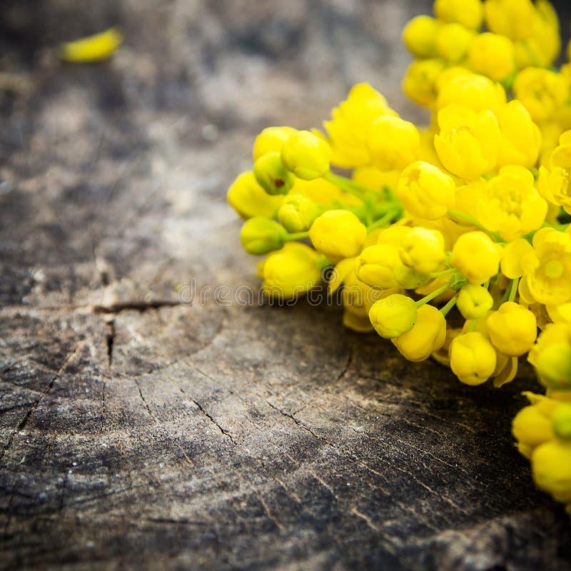 束与绿色叶子的紫罗兰色和黄色花 免版税图库摄影