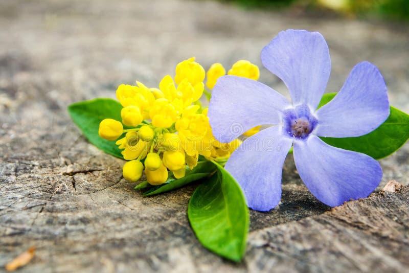 束与绿色叶子的紫罗兰色和黄色花 免版税库存图片