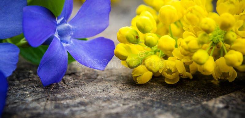 束与绿色叶子的紫罗兰色和黄色花 库存照片