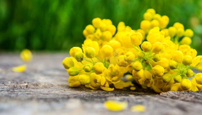 束与绿色叶子的紫罗兰色和黄色花 图库摄影