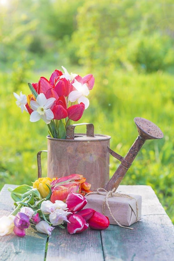 束各种各样的多彩多姿的郁金香在老喷壶和ha 免版税库存照片